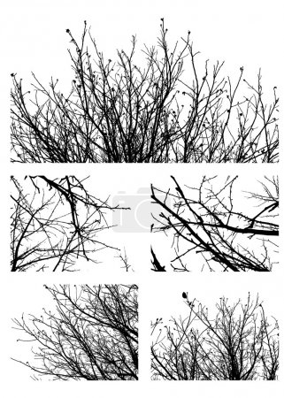 Black silhouettes of fruit trees isolated on white...