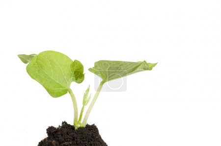 Photo for Growing green plant sprout in a dark soil - Royalty Free Image