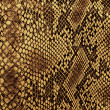 Snake skin with the pattern lozenge style...