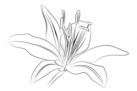 Outline Lily