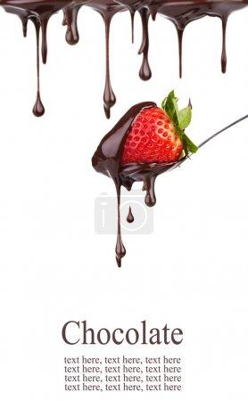 Photo pour Fraise au chocolat - image libre de droit