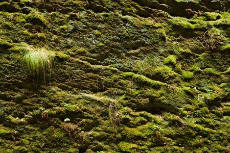 Photo pour Fond de mousse sur le rocher dans la nature - image libre de droit
