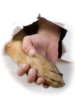 Dog and man hand close up