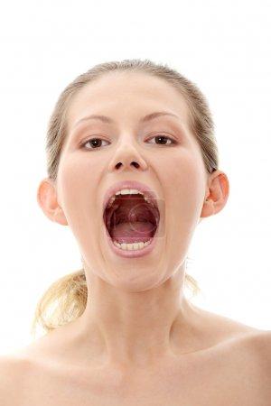 Photo pour Portrait de magnifique femelle hurlante isolée sur blanc - image libre de droit