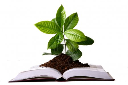Green plant growth from book