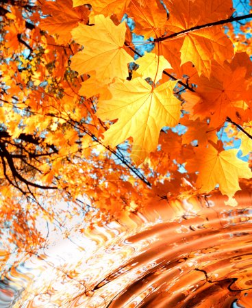 Maple over water