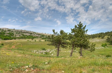 Photo for Mountains landscape with pine trees in foreground - Royalty Free Image