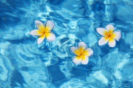 Photo pour Fleur frangipanique tropicale flottant en eau bleue - image libre de droit