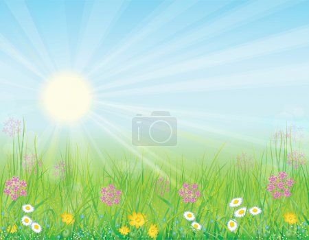 Background with sunny meadow