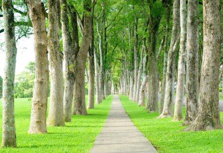 Photo pour Petite route à travers de la rangée d'arbres - image libre de droit