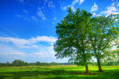 Tree on summer field