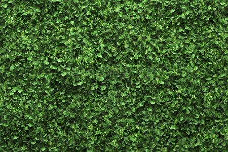 Photo pour Fond de haie de catégorie verte aux feuilles vertes - image libre de droit