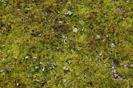 Photo pour Une partie du terrain avec une mousse et de l'herbe - image libre de droit