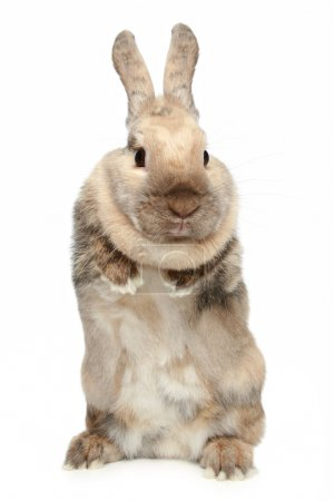 Cute Rabbit on a white background