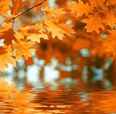 červené podzimní listí odráží ve vodě