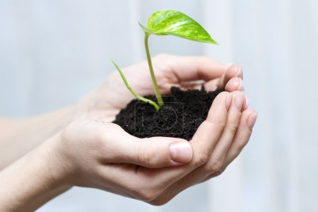Photo for Human hands holding small plant. New life (beginning) concept. - Royalty Free Image