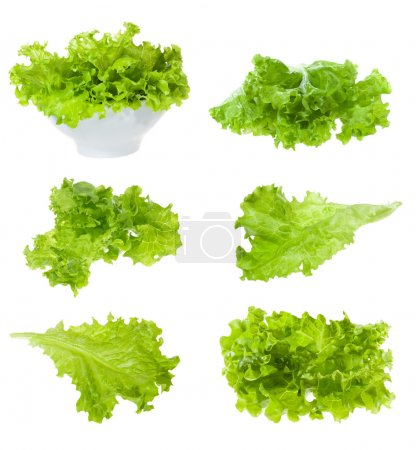 Photo for Set with lettuce salad on white background - Royalty Free Image