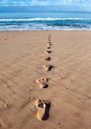 Photo pour Empreintes de pas avec plume dans le sable mouillé dans une ligne vers la mer et les brise-roches - image libre de droit