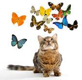 Farfalla e giovane gatto norvegese