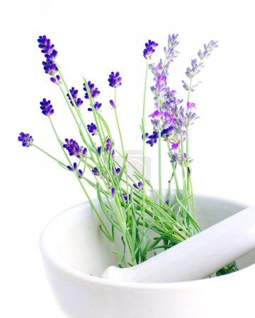 Lavender herb leaves in an ceranic mortar with pestle over white