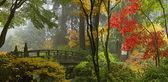 Wooden Bridge at Japanese Garden in Autumn Panorama