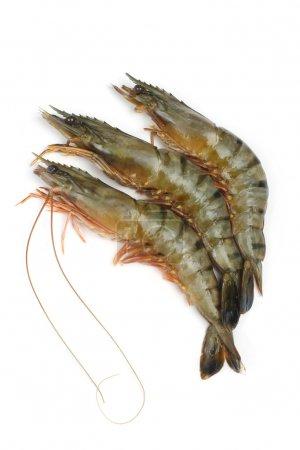 Fresh tiger shrimps on a white background