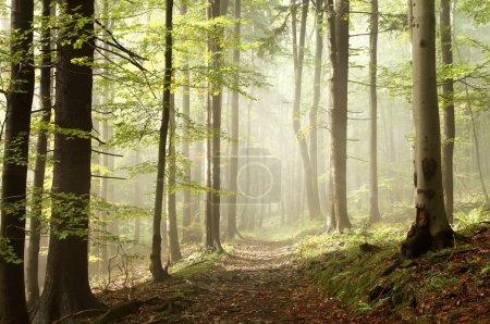 Photo pour Chemin dans les bois au début automne sous le soleil après quelques précipitations du jour. - image libre de droit