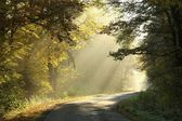 Autumn forest road at sunrise