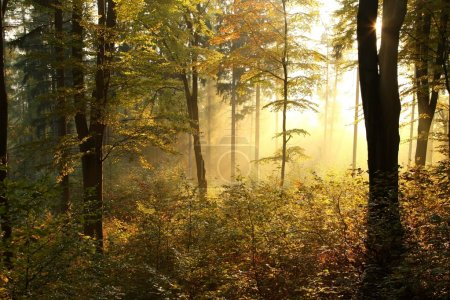 Picturesque autumn forest at dawn