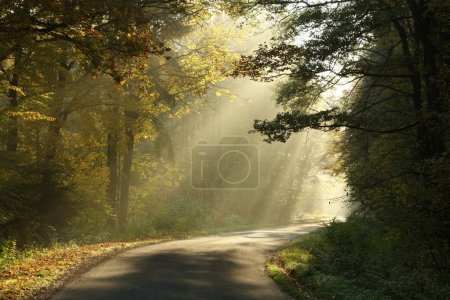 Country road in misty autumnal forest