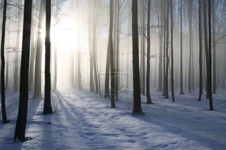 Photo pour Chemin dans la forêt brumeuse d'hiver rétroéclairé par le soleil du matin. Photo prise en décembre . - image libre de droit