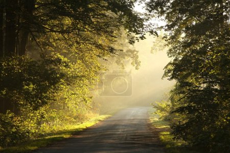 Rural lane in autumn forest at dawn
