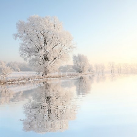 Photo for Frosty winter tree illuminated by the rising sun. - Royalty Free Image