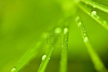 Photo pour Feuillage tropical avec gouttes d'eau fond texturé - image libre de droit