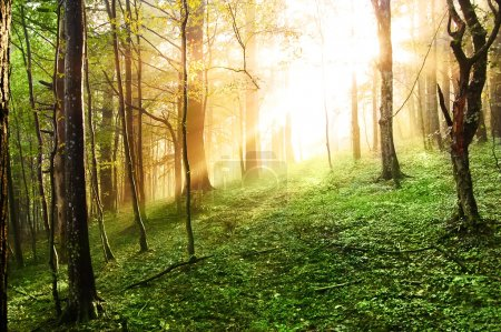 Photo for Sunset in the forest - Royalty Free Image