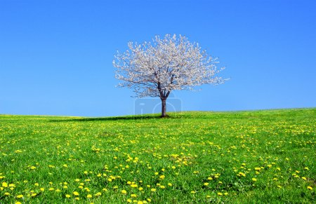 Blooming tree on a beautiful green meadow
