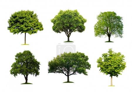 Photo pour Collection d'arbre isolé de l'été - image libre de droit