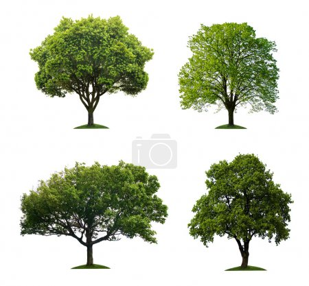 Photo for Summer trees isolated on white - Royalty Free Image