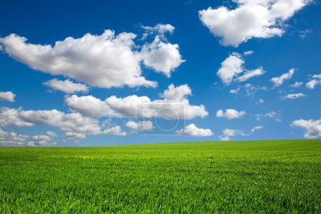 Photo for Field on a background of the blue sky - Royalty Free Image