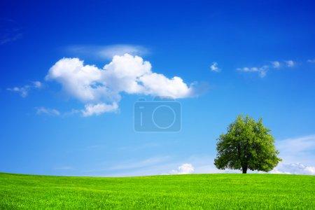 Photo pour Planète verte - Terre - image libre de droit