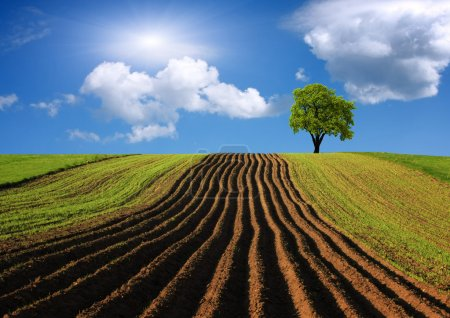 Photo for Agricultural landscape - Royalty Free Image