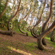 Curved forest reserve in Poland...