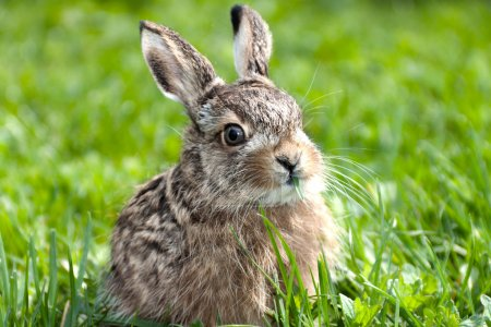 Photo for Llittle hare sitting in the green grass - Royalty Free Image