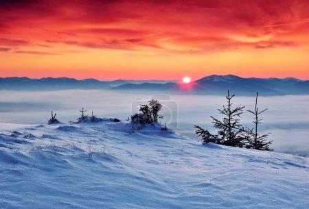 Photo pour Paysage hivernal avec neige dans les montagnes Carpates, Ukraine - image libre de droit