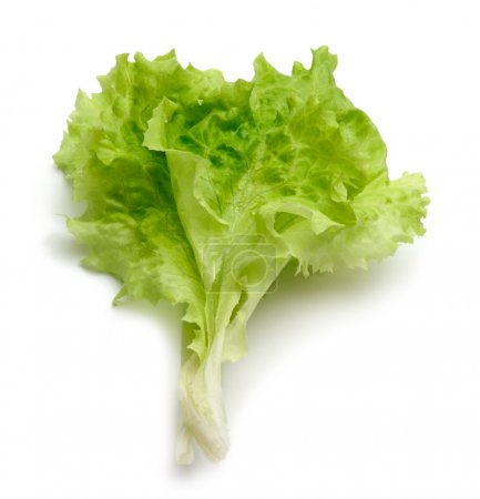 Photo for Lettuce - Royalty Free Image