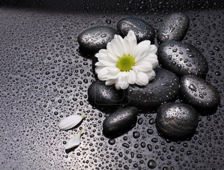 Black stones and white camomile