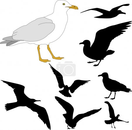 Illustration for Seagulls - vector illustration - Royalty Free Image