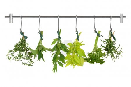 Photo for Herb leaf sprigs drying on a stainless steel rack, thyme, bergamot, lovage, golden marjoram, parsley and rosemary, isolated over white background. - Royalty Free Image