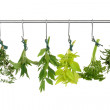 Herb leaf sprigs drying on a stainless steel rack,...