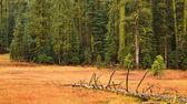 Yosemite Fall Scene